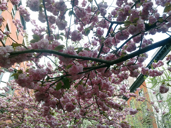 .-Spring-was-a-wound-of-beauty.