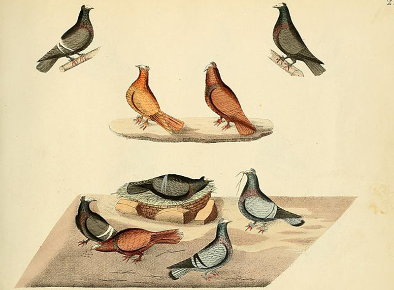 'By What Mistake Were Pigeons' by James Henry