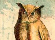 'The Owl' by Wendy Videlock