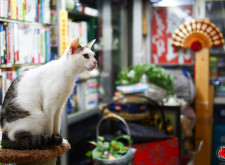 How did cats end up in bookshops?