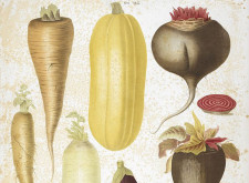 'Root Vegetables' by Sumana Roy