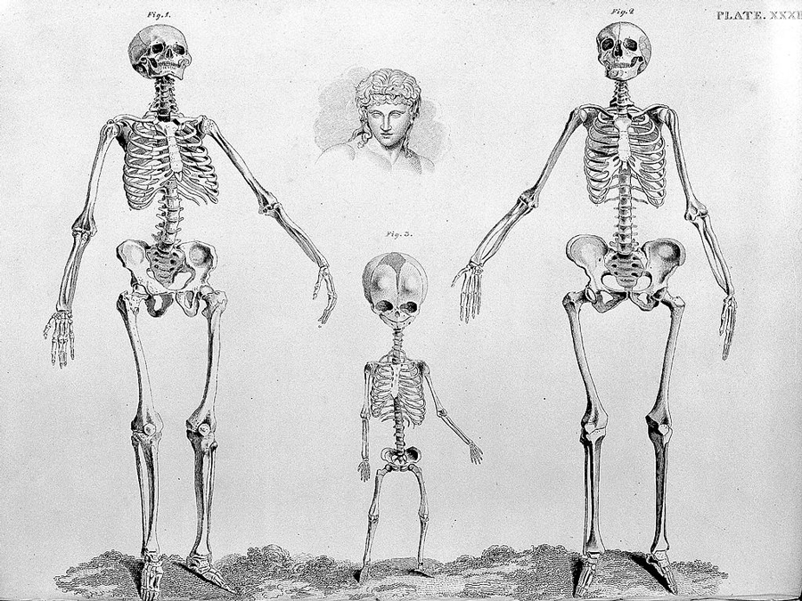 barclay_j-_the_anatomy_of_the_bones-_wellcome_l0028782