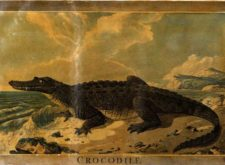 'The Crocodile' by Fyodor Dostoyevsky