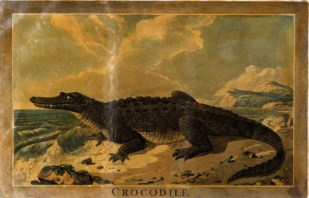 Image result for the monkey and the crocodile drawing