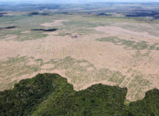 Bolsonaro and Amazonian Deforestation