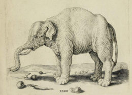 Elephants, Horses, and the Proportions of Paradise