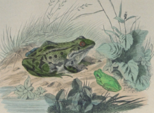 Science needs birds and frogs…