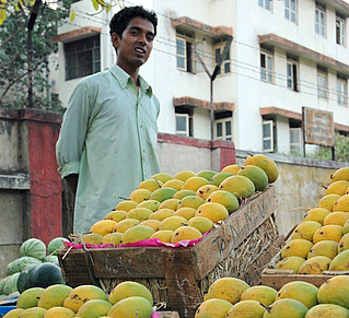 Must have mangoes