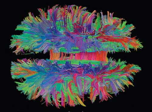 Neuroscience Networks
