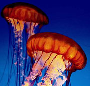 The Complexity of Jellyfish