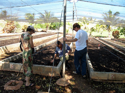 Cuba's agroecological achievements are remarkable, yet still they import food…