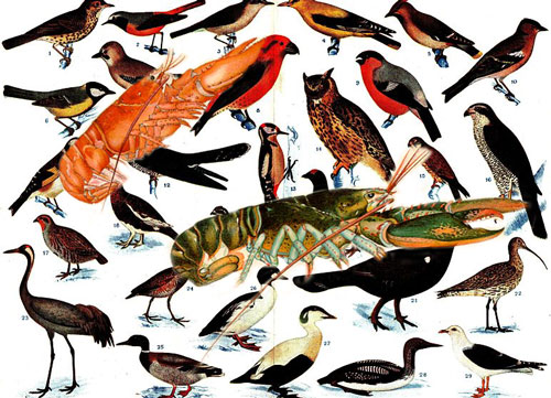 Of Birds and Lobsters by Elias Tezapsidis